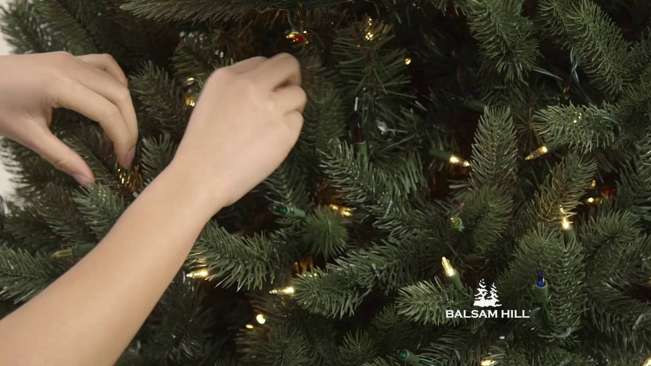 vermont white spruce narrow tree from balsam hill - White Spruce Christmas Tree