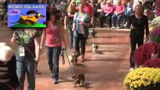 Johnny Burke & the 2014 Wiener Dog Parade