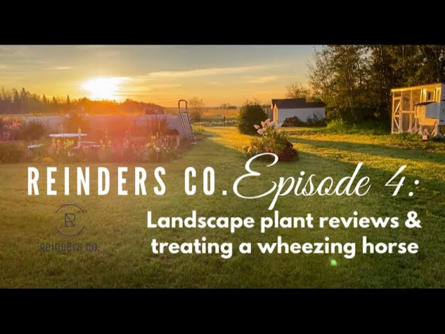 Reinders Co. Episode 4 Landscape Plant review & Treating a wheezing horse