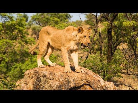 VOLUNTEERING IN SOUTHERN AFRICA