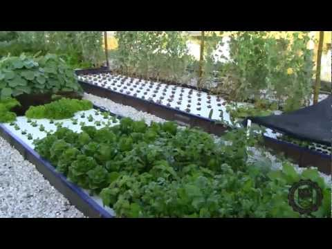 Aquaponics easy aquaponics university of florida info for Aquaponics pond design