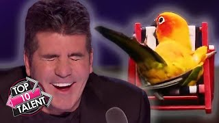 10 FUNNIEST Animal Auditions EVER On Got Talent!