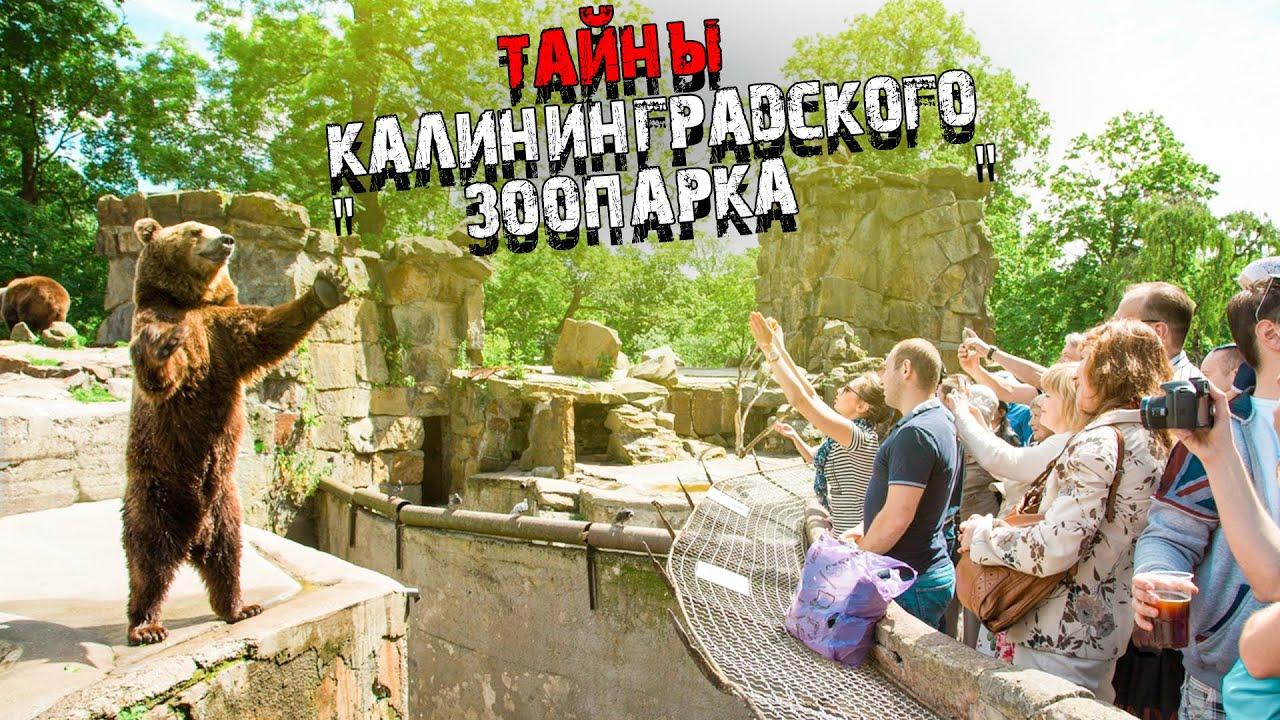Тайны Калининградского Зоопарка. #110