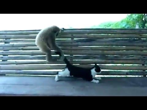 игграет с котом