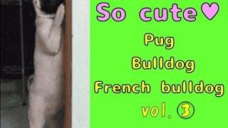 【so Cute】☆pug & Bulldog & French Bulldog☆vol.3  ♪gif Animations♪