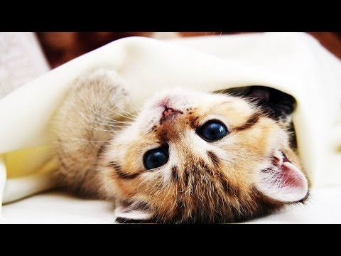 Darf die Katze ins Bett?