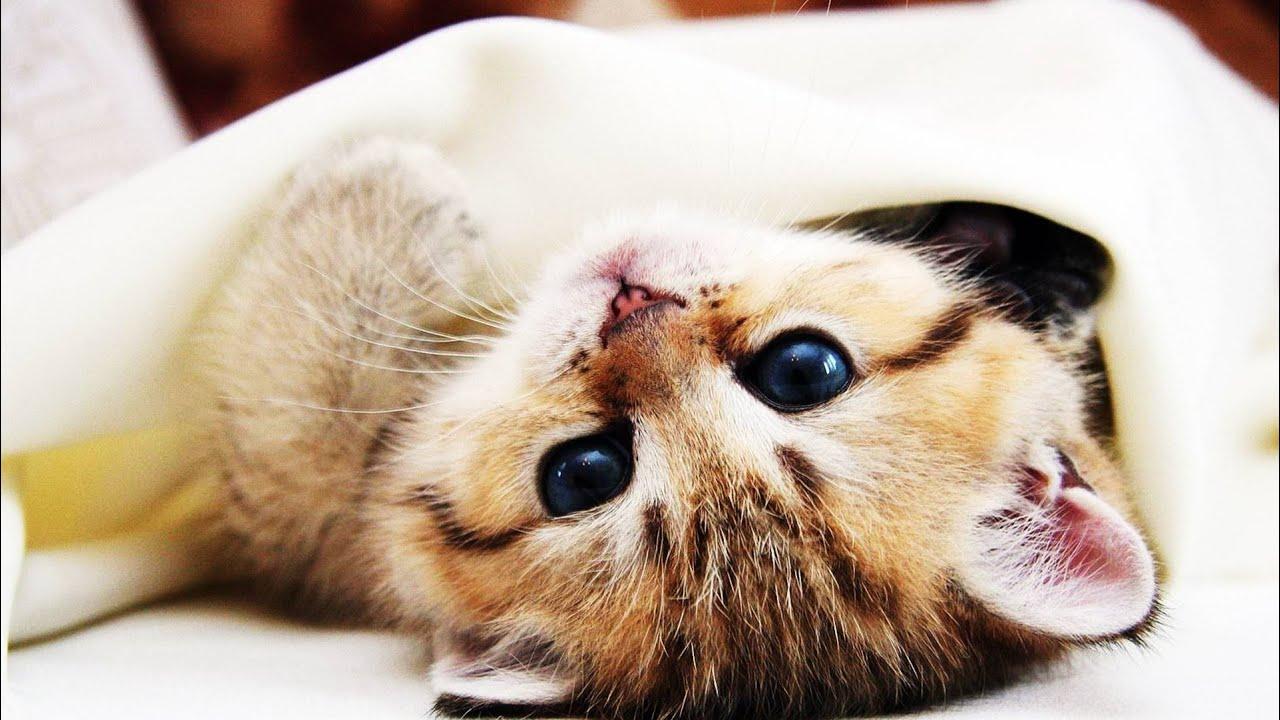 Darf die Katze ins Bett? - YouTube