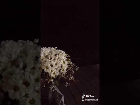 Omzunda ağlayan bir sen (kısa videolar)
