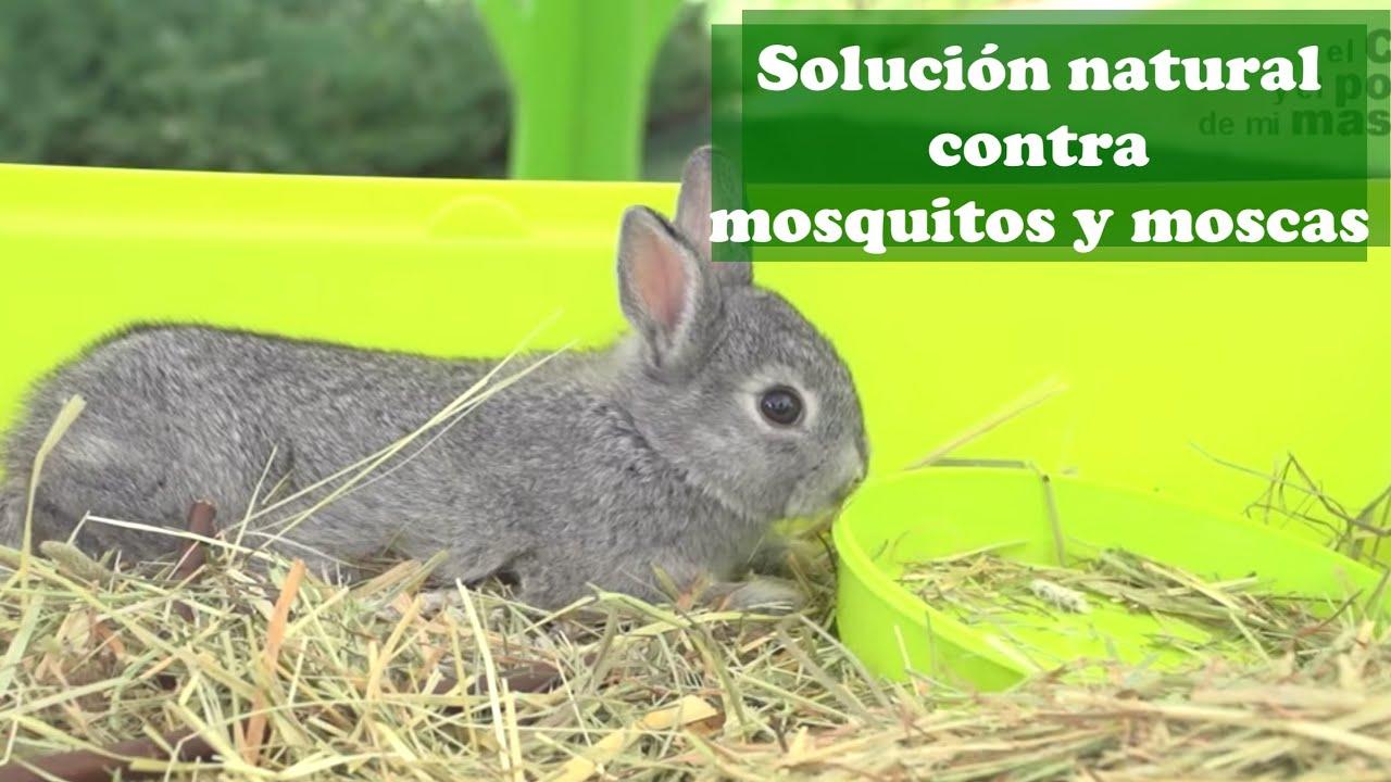 Conejos: Solución natural contra mosquitos y moscas