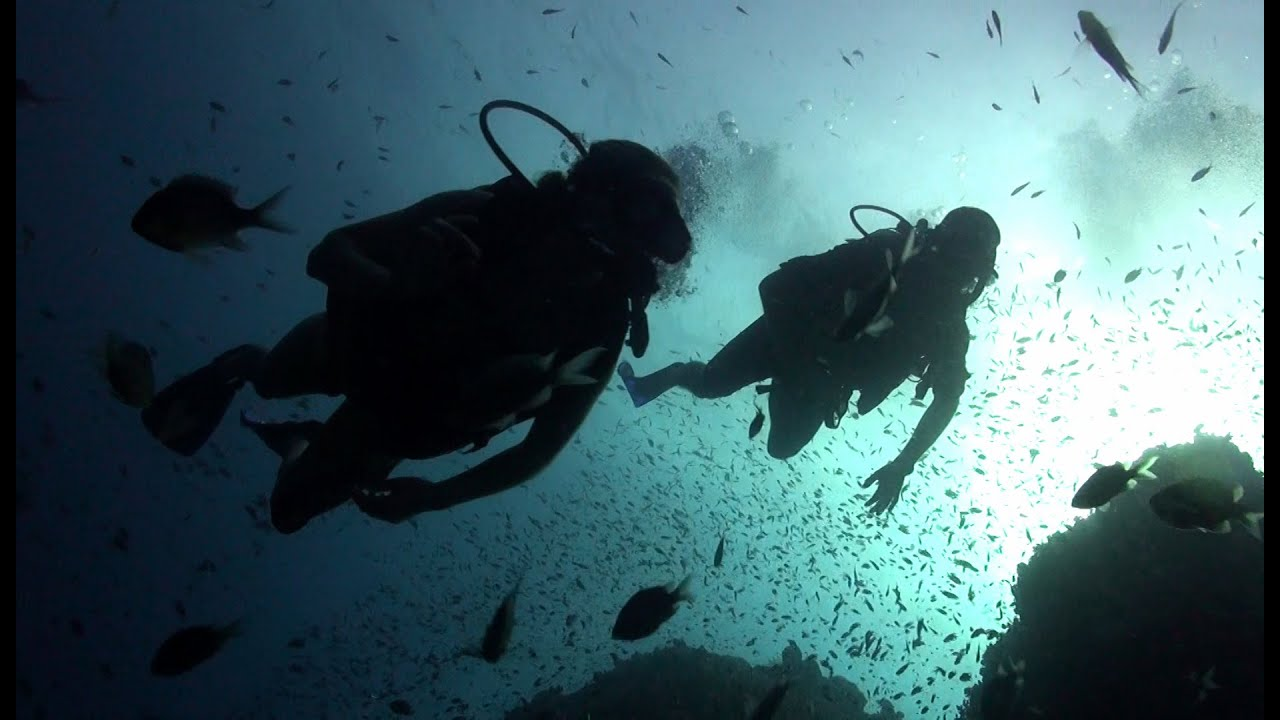 Scuba Diving With Roctopus In Koh Tao Youtube