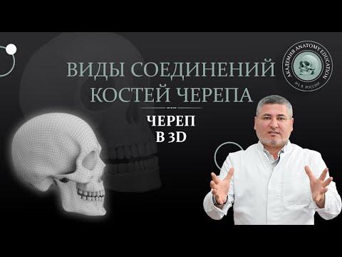 Как соединяются между собой кости черепа