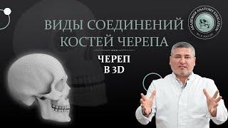 Скачать 3D Анатомия черепа Виды соединений костей черепа 3D Anatomy Of The Skull Joints Of The Skull Bones