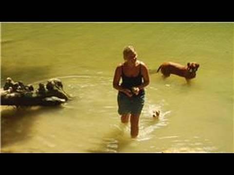 dog-training-:-how-to-teach-a-dog-to-swim