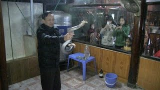 Eat a LIVE King Cobra in Hanoi, Vietnam