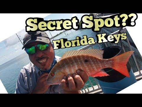 Florida Keys Bridge Fishing - Secret Spot Revealed??!!