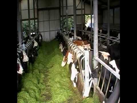 Cow Pow: Animal Feeding System