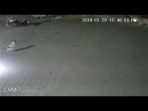 JAURIA DE PERROS MATAN A UNA MUJER EN LOS HÉROES TECÁMAC//VIDEO COMPLETO