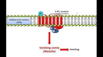 Metoclopramide: Mechanism of action