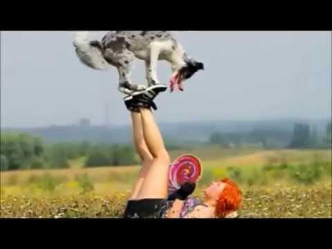 Border Collie Zoe - Frisbee !!