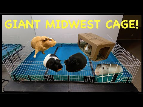 How To Build A GIANT Midwest Guinea Pig Cage
