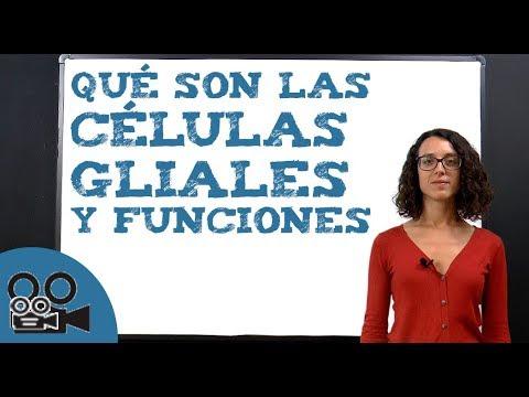 Qué son las células gliales y funciones