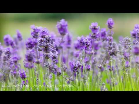 Namastè: 3 RELAXING HOURS of Background Sounds of Nature and Buddhist Meditation Music