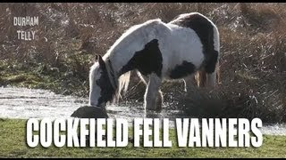 Cockfield Fell Horses - Irish Cob - Vanners - Co Durham