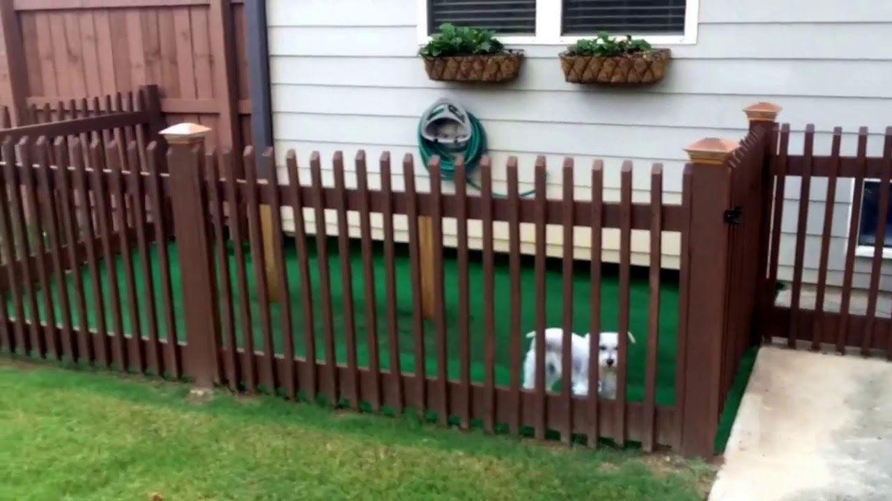 - BACKYARD DOG KENNEL IDEA!!!! EASY DIY - YouTube