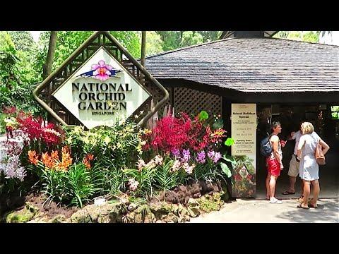 Жемчужина Сингапура - Национальный Сад Орхидей.