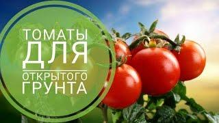 Сеем семена томатов для открытого грунта САМЫЕ ЛУЧШИЕ СОРТА