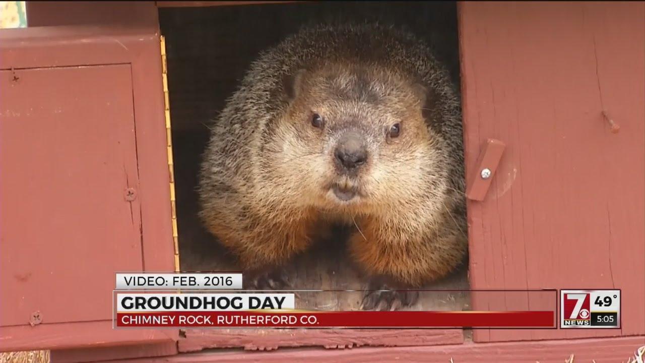 Uncategorized Groundhog Day Videos groundhog day 2017 youtube
