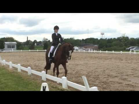 Mr. Mile High & Alison Wilaby. First level test 2 at Sayre School. 2016