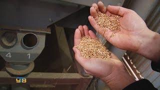 видео Стационарные влагомеры зерна