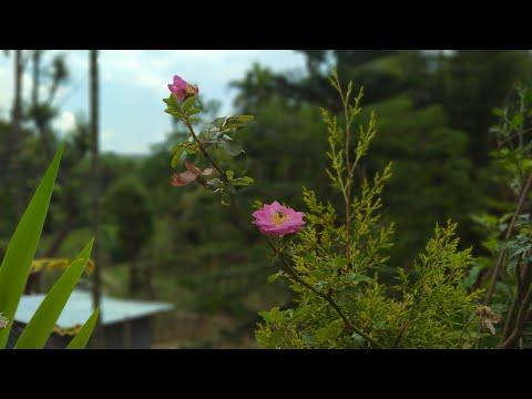 New Garo Song For Corona Virus||no Problem||NIKSOANI ACHIK KURANGCHI