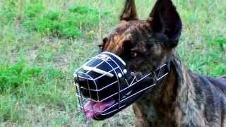 Great Dane, Cane Corso and Dalmatian in Wire Basket Muzzle