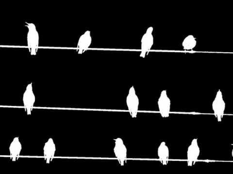 Slow down- Bird Flies High