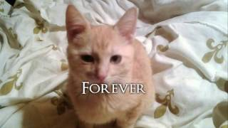 Kizoa Movie - Video - Slideshow Maker: Our Lovely Rescue Pets from 2016, Romania