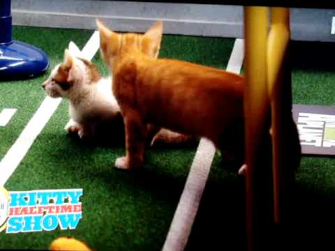 Puppy Bowl VII:  Kitty Half-time Show (Super Bowl 2011)