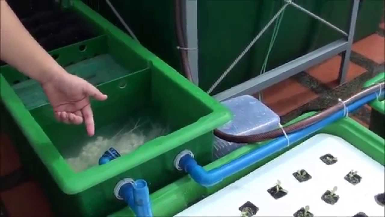 How To Clean Your Ap Filtration System Aquaponics