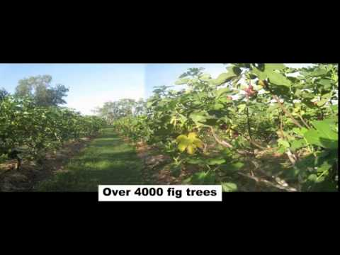 Waterfront Farm - Established Orchard with Secure Water For Sale