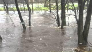River Nidd in Flood
