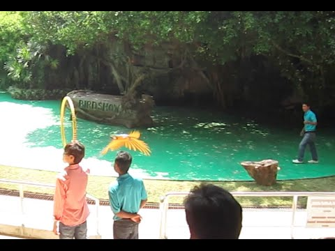 Bird Show and Tiger Show at Koh Kong Safari World, Cambodia