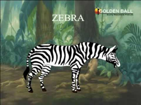Wild Animals Lesson for Kids: Facts & Types - Study.com