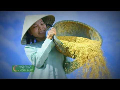 Món ăn ký ức: Cơm nắm thịt kho - Thành Phố Hôm Nay [HTV9 – 26.04.2016]
