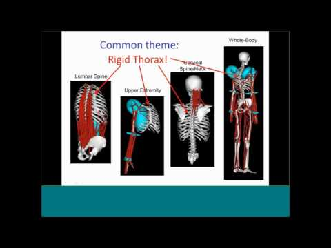 Webinar: Meet Me in the Middle - A Thoracolumbar Spine and Rib Cage Model in OpenSim