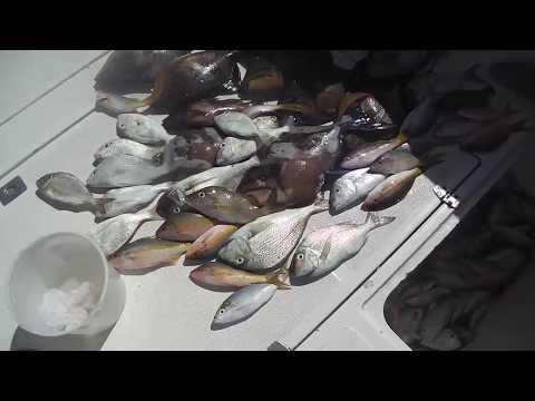 Reef Fishing In Cuba