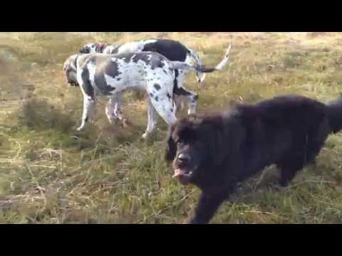 how to train a dog to roll over video