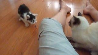 [Коты] Длинное и никому ненужное видео про котов