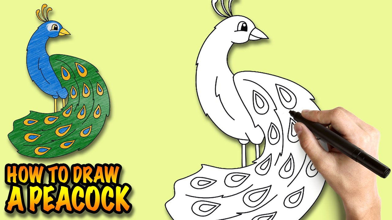 how to draw a peacock easy step by step drawing lessons for kids youtube