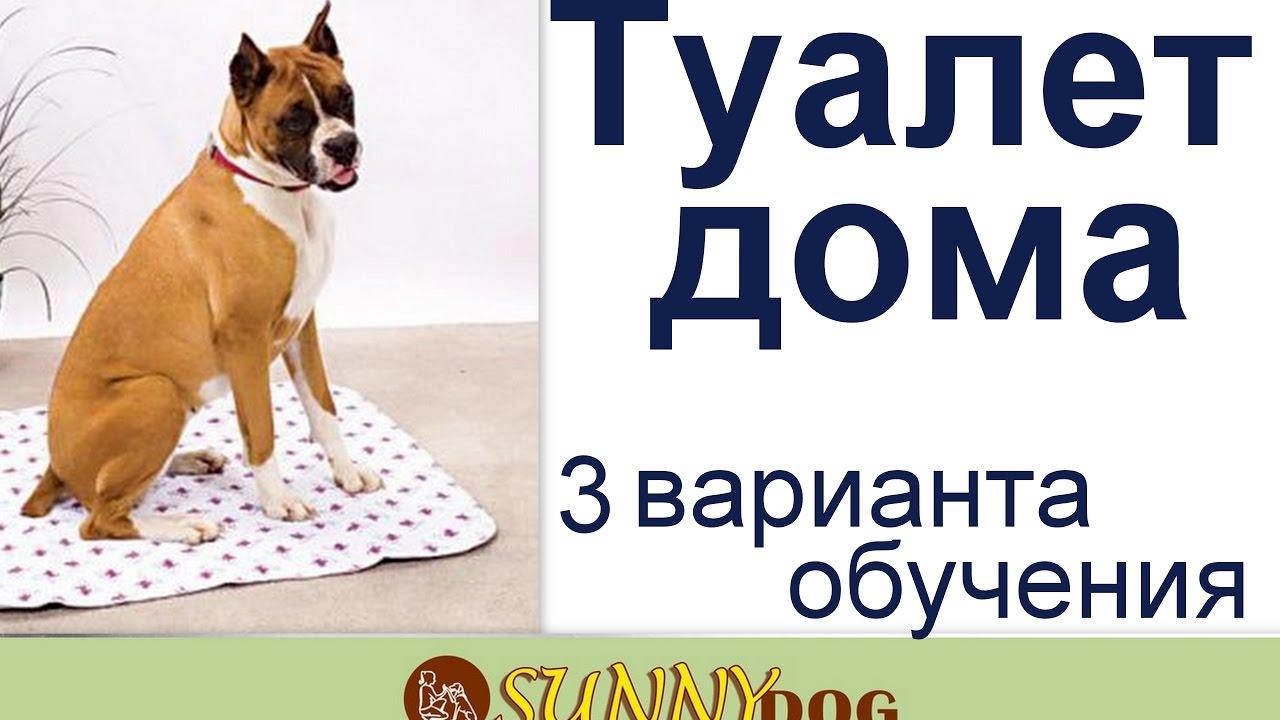 3 самых лучших способов быстро приучить щенка к туалету дома на пеленку